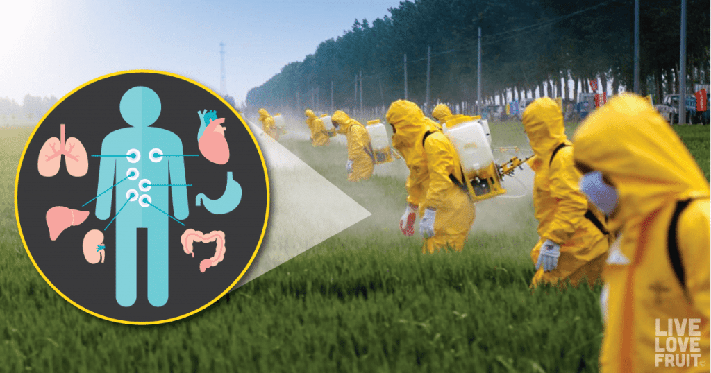 Glyphosate Detox: How To Rid Your Body of Harmful Herbicide and Pesticide Residues